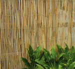 4m x 2m Reed Fencing