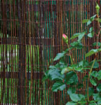 5m x 1.5m Willow Fencing